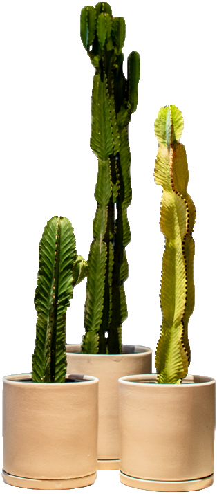 cactus BL cut out.png