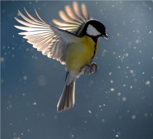 beautiful%252Bbird.jpg