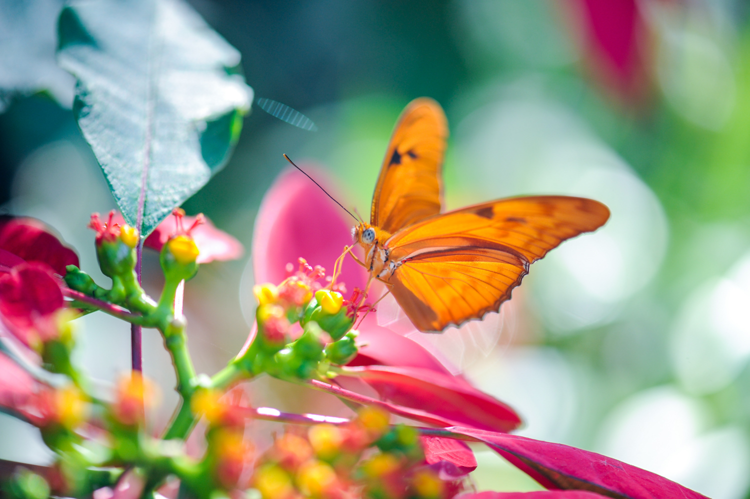 Color Photograph, Insect, Flower, Butterfly, Midwest, Interior Design, Wall Art