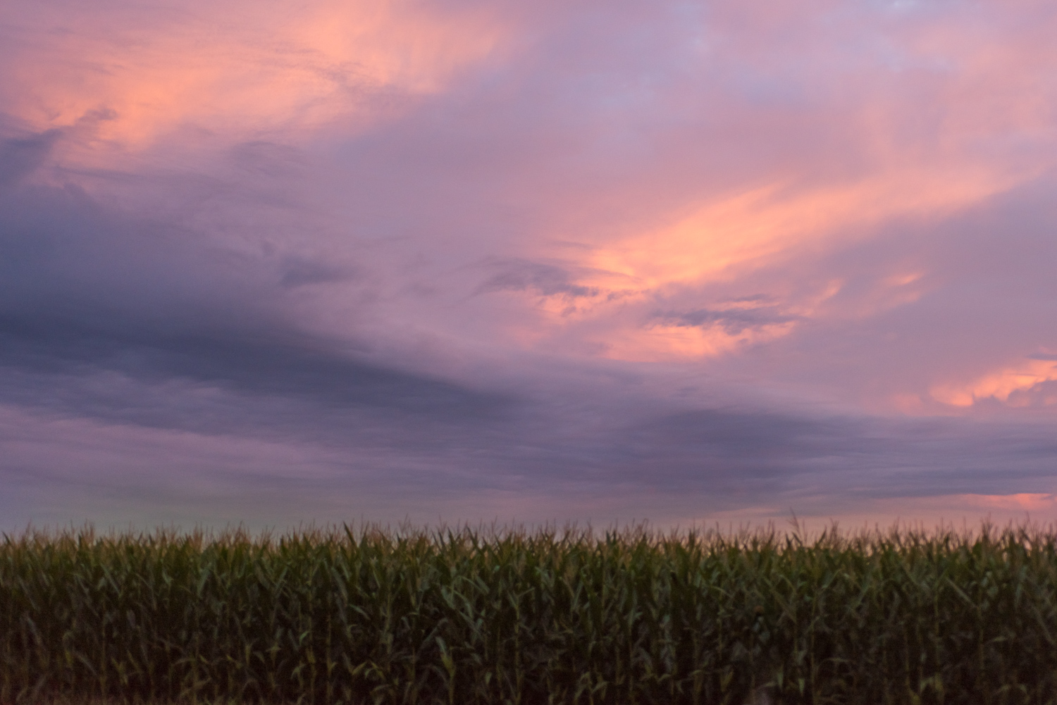 Color Photograph, Midwest, Sunset, Corn, Clouds, Sky, Interior Design, Wall Art