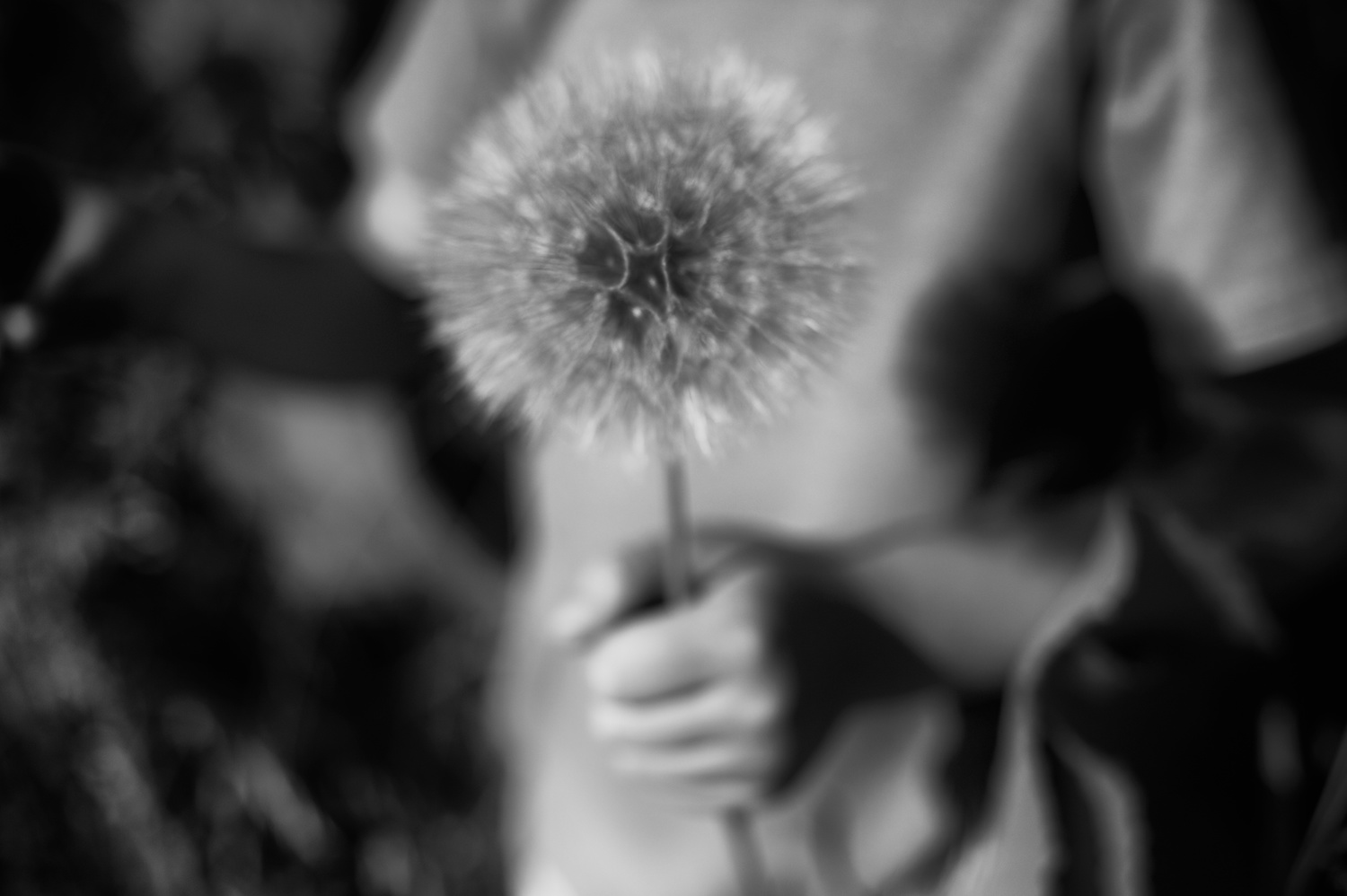 Black and White Photograph, Dandelion, Midwest, Interior Design, Wall Art
