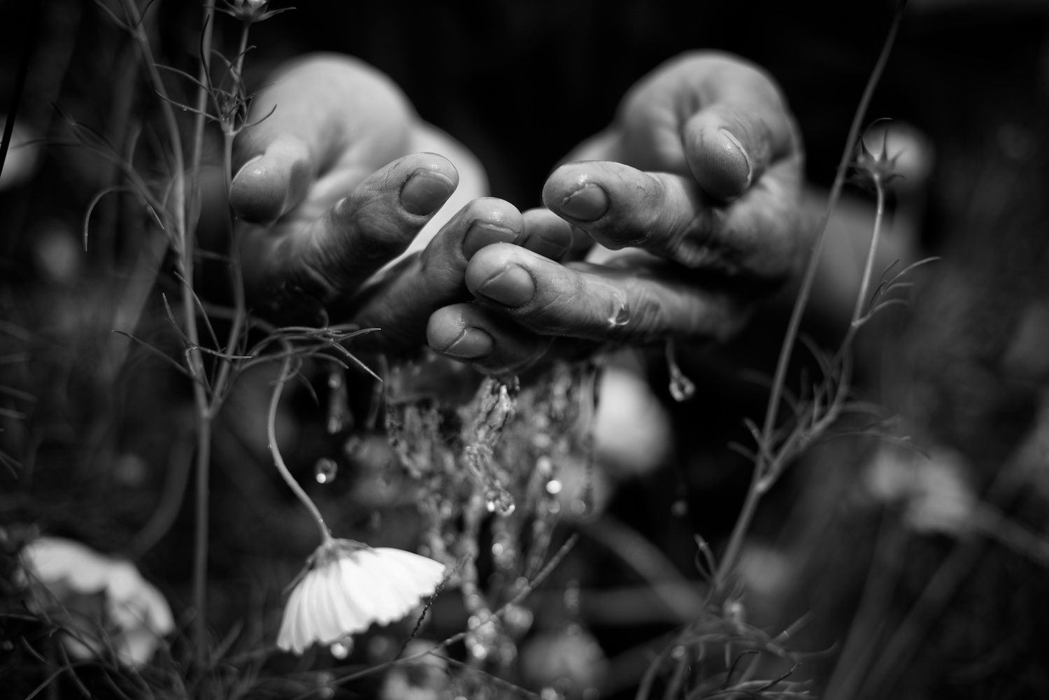 Black and White Photograph, Midwest,Water, Hands, Flowers, Interior Design, Wall Art