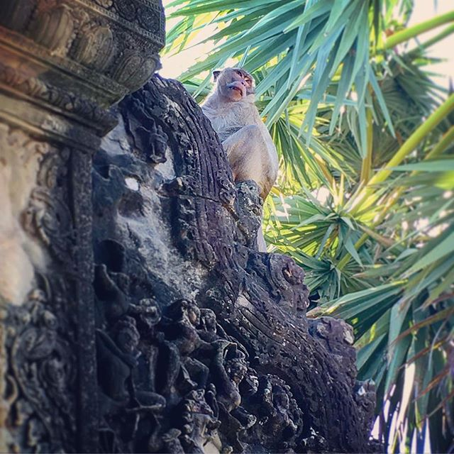 Southeast Asia is amazing. It's one of the most beautiful parts of our world. But this SE Asian monkey is pissed at all of us who are visiting. Why?  Because we're messing with his home which includes Angkor Wat, one of UNESCO's designated World Heritage Sites located in Cambodia. It's a mind-blowing masterpiece along with the 50+ other ancient temples in the surrounding area.  But see all that black shit on the carvings? This is pollution - specifically caused by acid rain. Millions of us visit this area every year by way of huge tour buses and tuk tuks (passenger carriages pulled by motorbikes) spewing out black smoke.  The pollution is terrible all throughout SE Asia mostly due to vehicle emissions, coal-fired power plants, palm oil production and garbage/plastic burning. Many motorists wear masks which may help lessen the damaging effects of pollution on their lungs, but much of the population still suffers from lung problems.  Of course, nothing can be done about the damage done to their cultural sites.  This is just one of many issues facing this part of our world, but it's important to realize that pollution is one of the most devastating issues facing our species and entire planet.  The more conscious we are of these issues, the more powerful we become at making our world a better place. Let's all live and travel more consciously.  DISCLAIMER: NO MONKEYS WERE HARMED IN THE MAKING OF THIS POST.