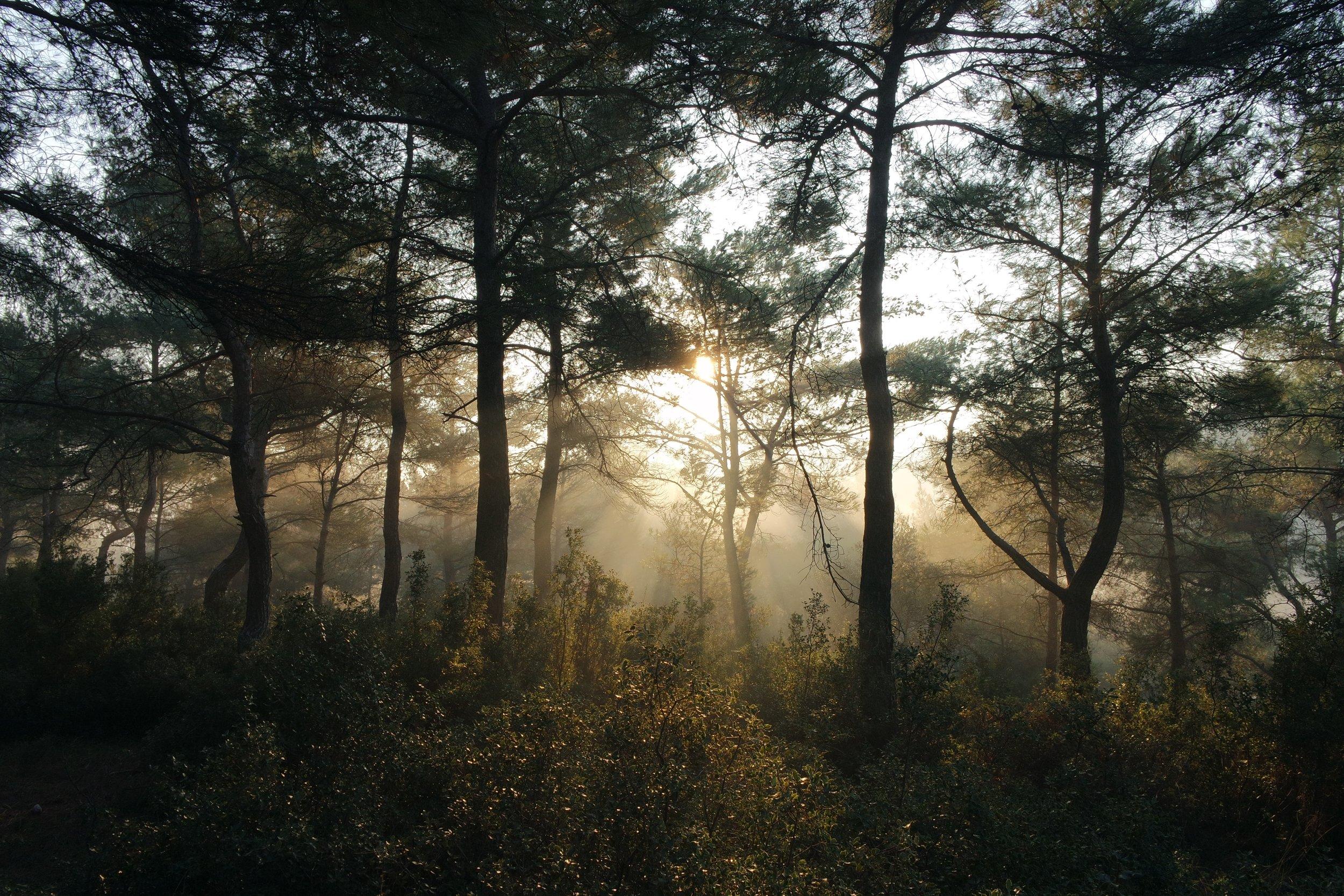 bushes-fog-foggy-23547.jpg