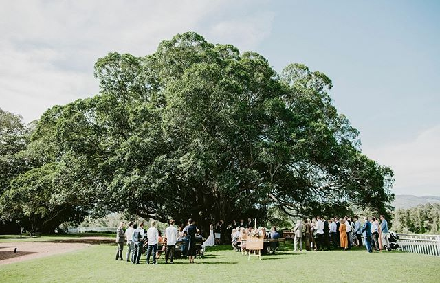I gotta say, I've been very lucky to attract so many fun couples! I don't want to jinx it so keep coming! I can't wait to share more of these guys, Eloise & James 🎉🌳
