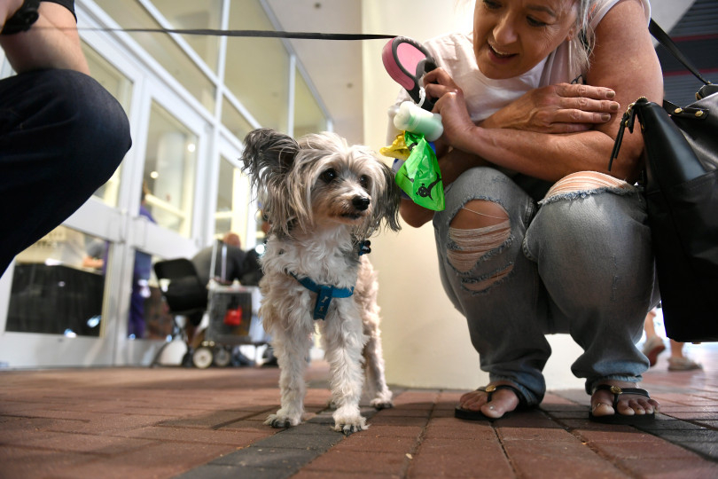 AVMA Street Clinic, July 17, 2018, Denver Convention Center. (Photos courtesy Denver Post) Todo.jpeg