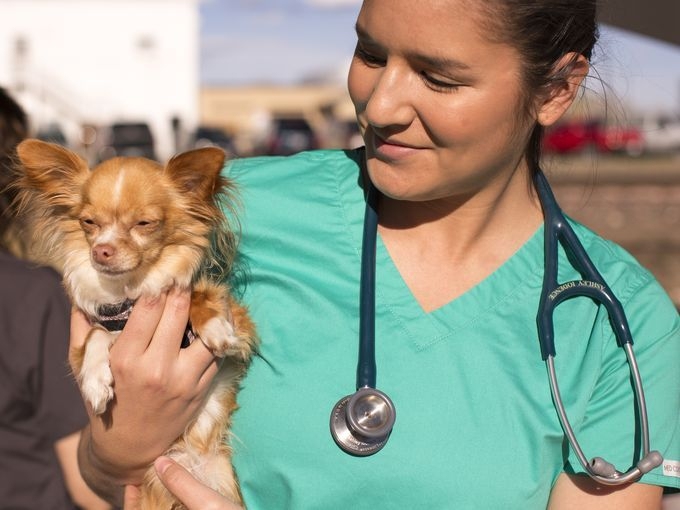 Our Mission- To provide free medical care and other services to pets of the homeless.   PayPal - The safer, easier way to pay online!      THE STREET DOG COALITION  Homeless Connect Fort Collins 2017 (vet and Chihuahua).jpeg