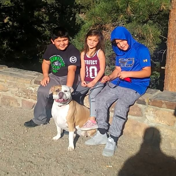 When your dog is your rock… - …and you find out she has a tumor that needs to be removed ASAP, your world is shook. The kiddos on the left experienced this recently with their six year old bulldog boxer mix, Diamond, and with the help of Waggle and the generosity of donors and Maddie's Fund, we were able to get Diamond the surgery she needed. Diamond is now back home with her family and recovering well. Thank you to everyone who supported her campaign; it's a gift that keeps on giving because Diamonds like this one should last FURever, or at least as long as possible.