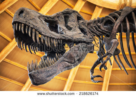 dinosaur-or-t-rex-skeleton-218626174.jpg