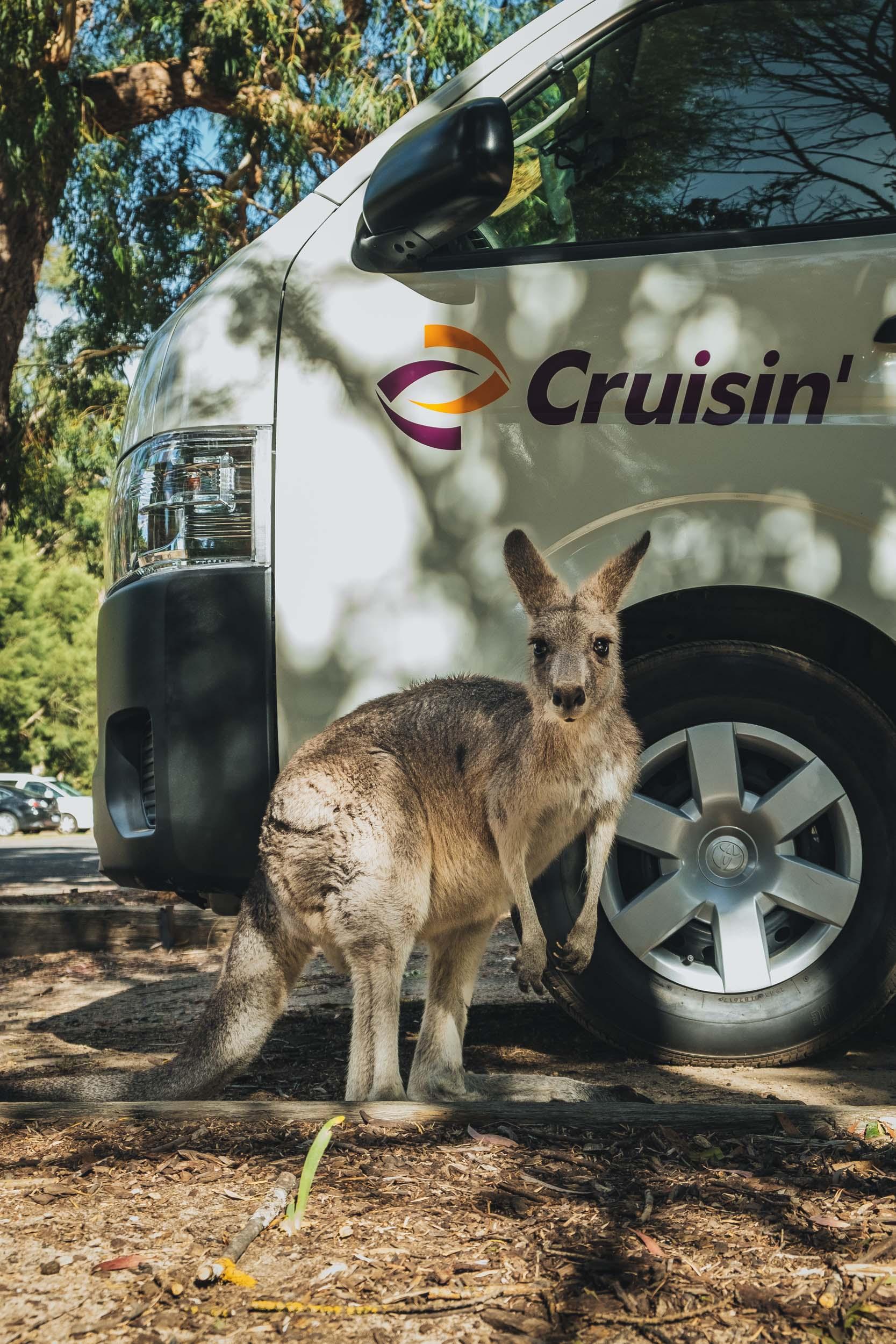 Australia-20180323-000791.jpg