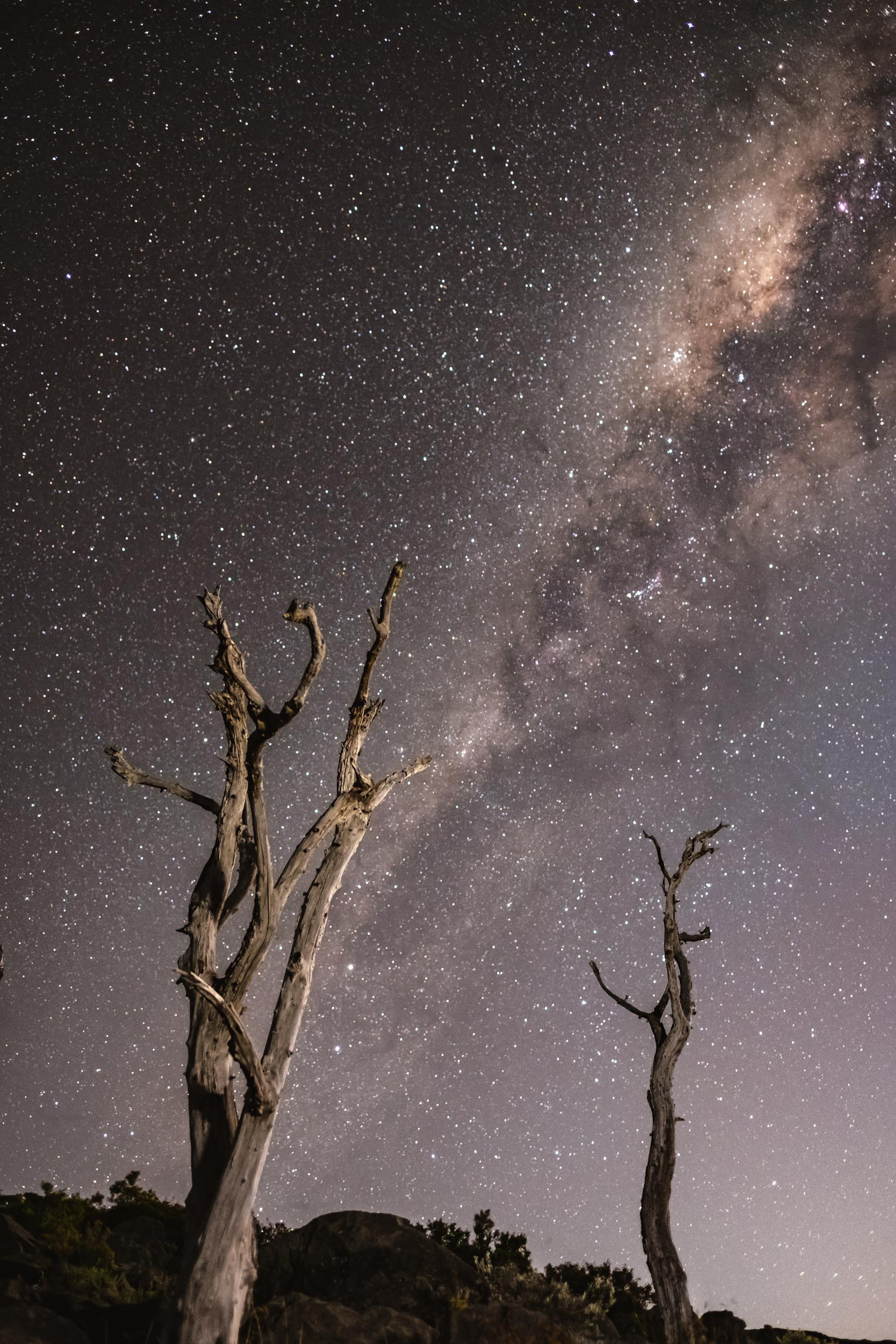 """"""" Why we like it : There's something celestially beautiful about a clear night sky, particularly when captured as expertly as Javi has here. The star-strewn backdrop to those eerily moonlit trees is of course the main event, but Javi adds an extra sprinkling of drama with his considered framing; the darkened vegetation that runs along the bottom of the image contrasting with the starlit brightness of the horizon."""" -    Source      — Emily Frost"""