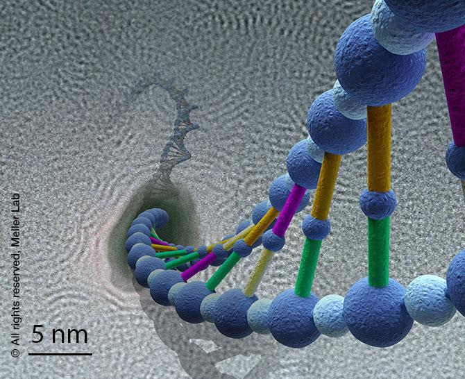NP-DNA-schematic_s.jpg