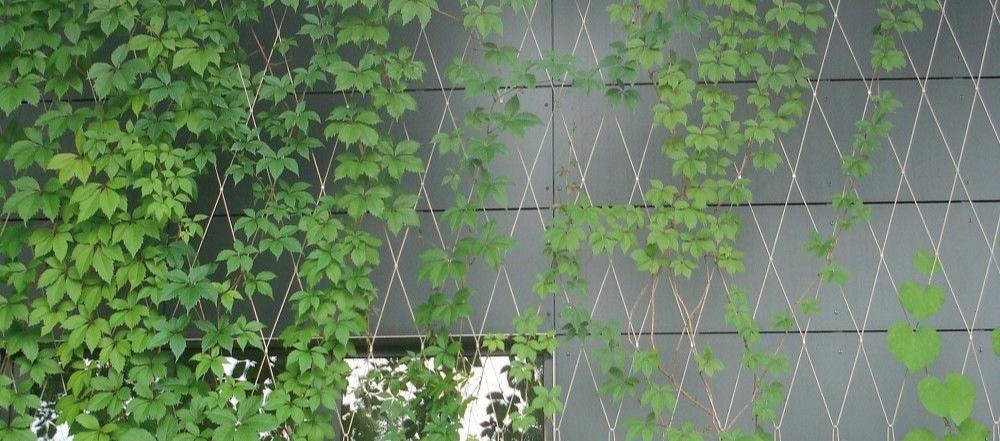 De klimhulp netten van Carl Stahl voor groene gevels creëren groen, koelte en verbinden hal en kantoor visueel.