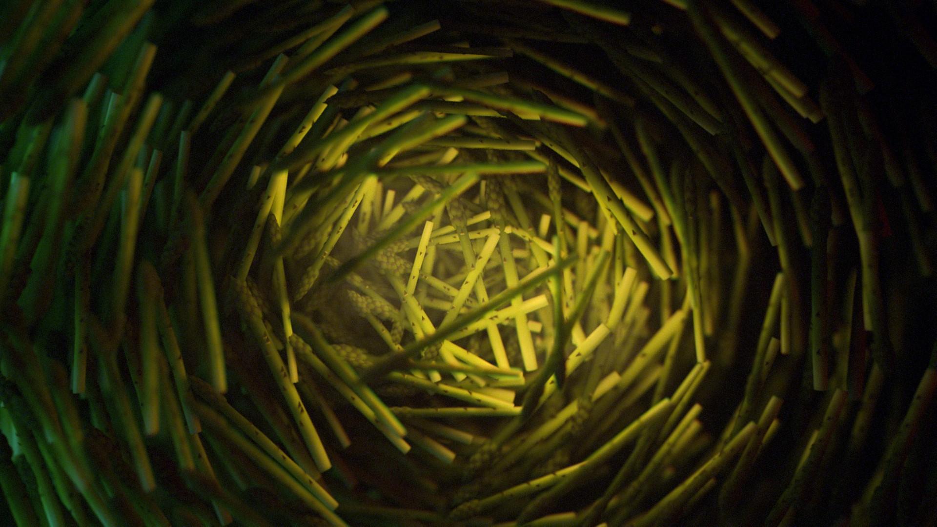 AsparagusCentered_01.jpg
