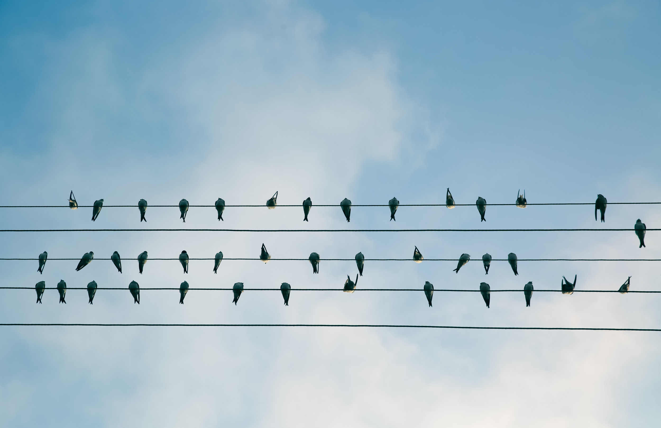 a collection of birds sitting on wires symbolising an ecosystem