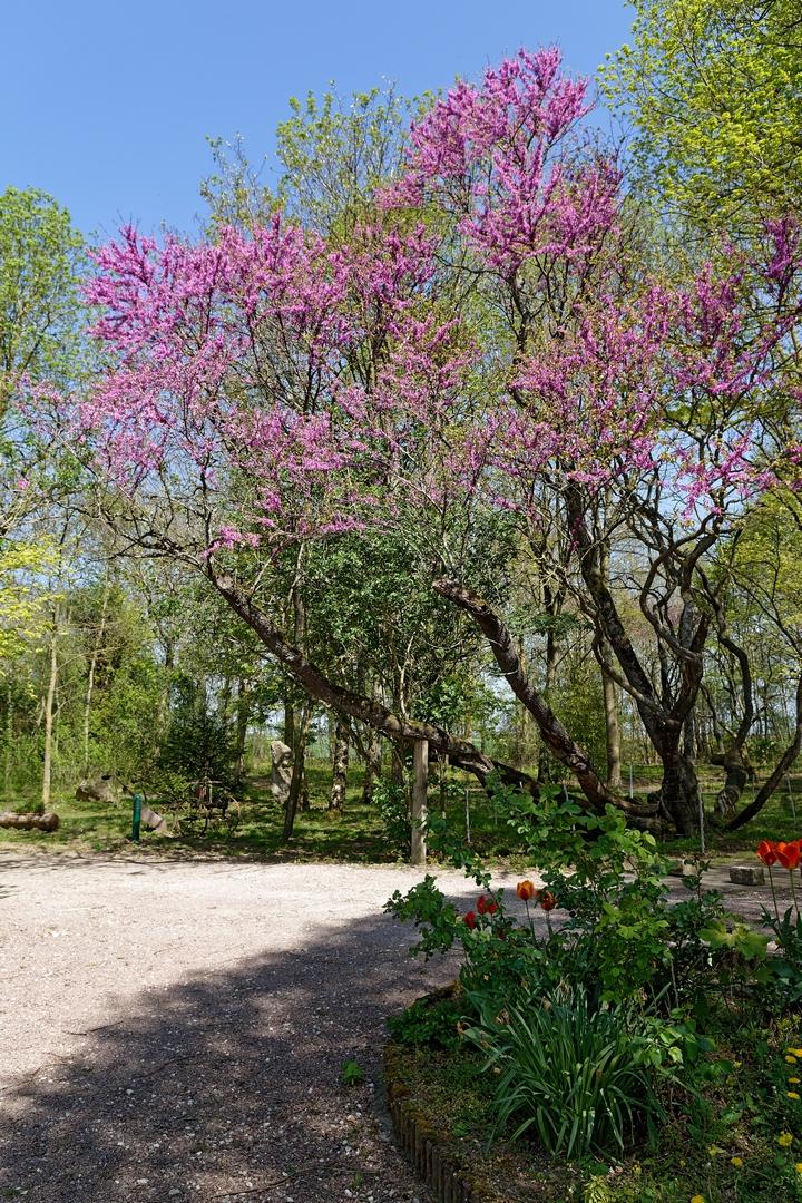 arbre bien-etre sejour nature famille la ferme de lavenir