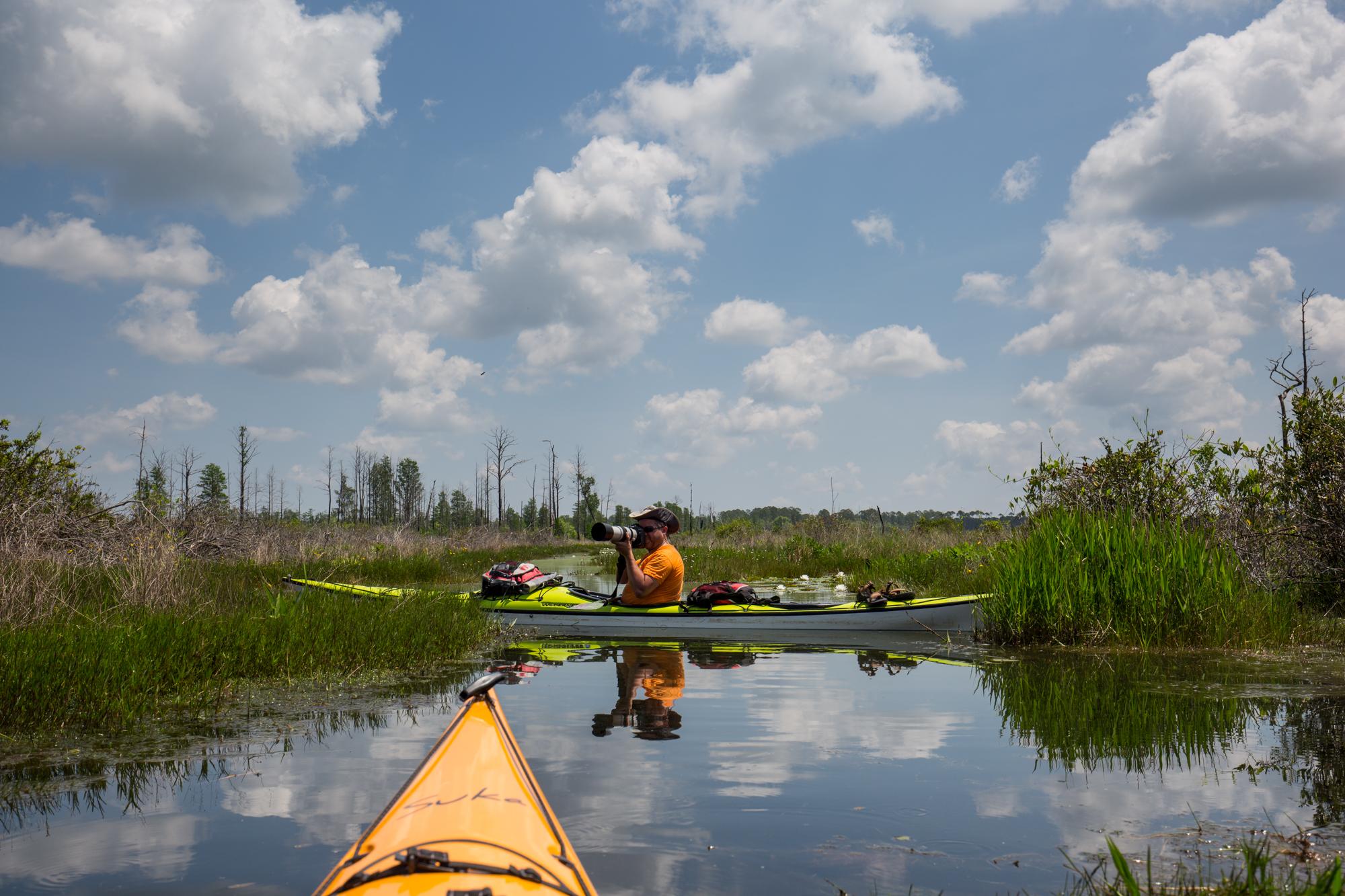 Shooting little blue herons in Okefenokee Swamp - photo credit Salwa Farah ( wanderingphocus.com )