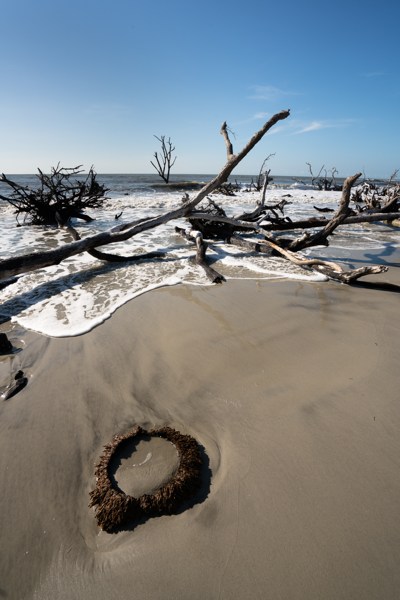 So many textures and details on the beach at Hunting Island state park