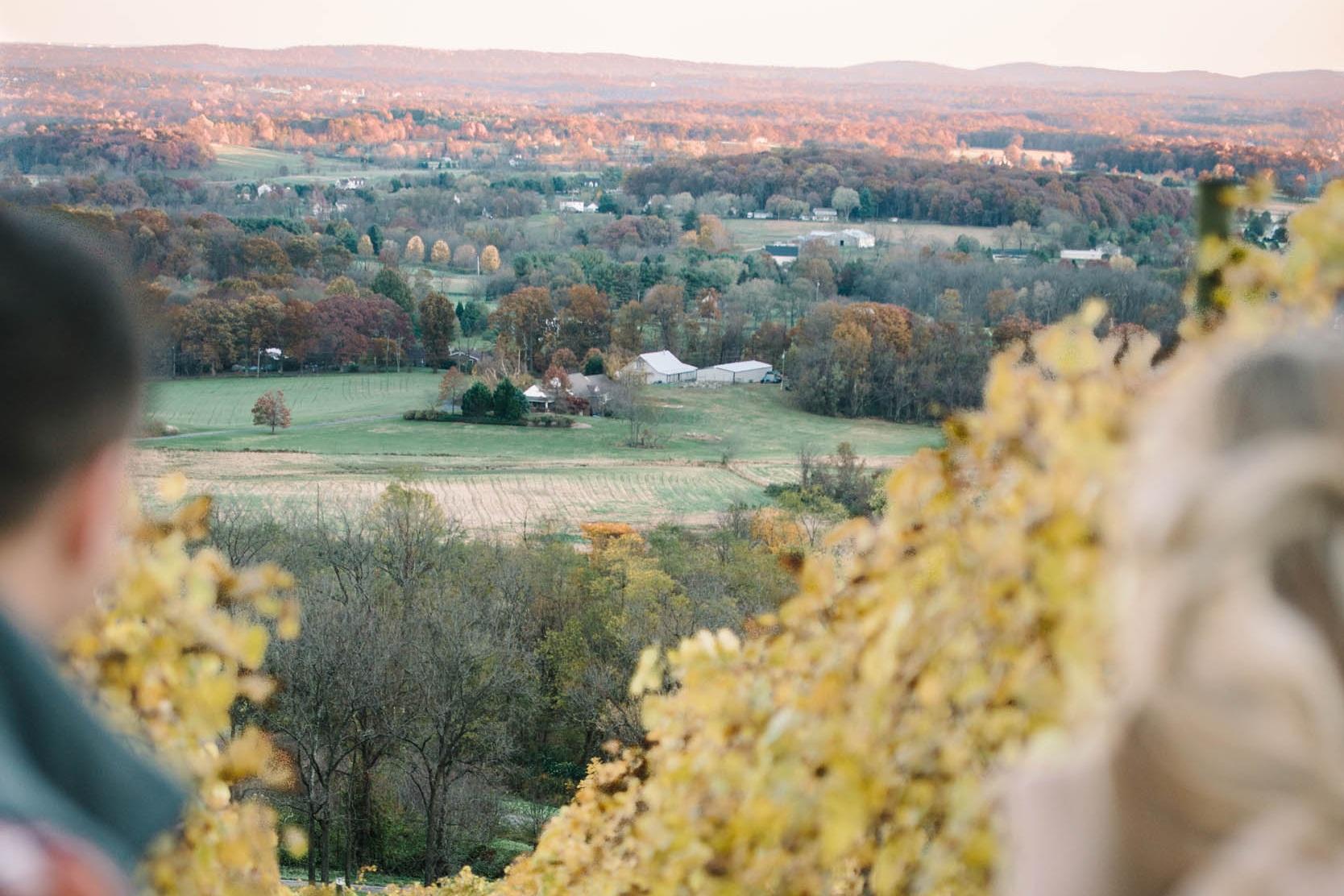 _new-bluemont-vineyard-in-the-vines-140.jpg