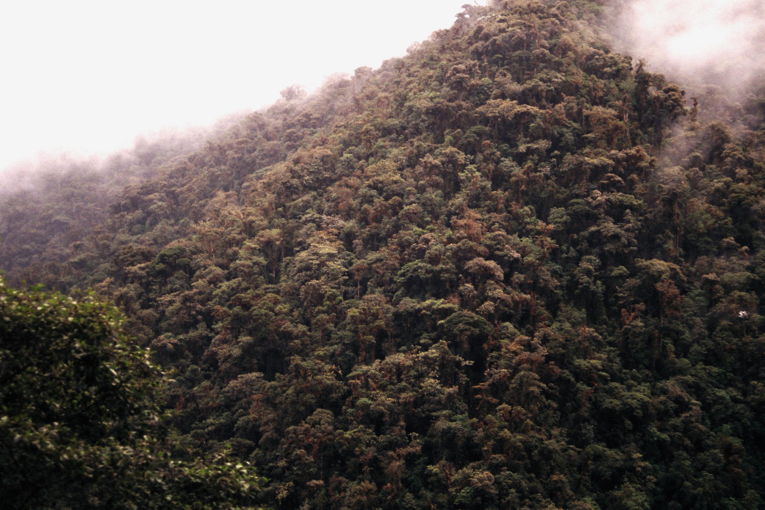 bosque nublado.jpg