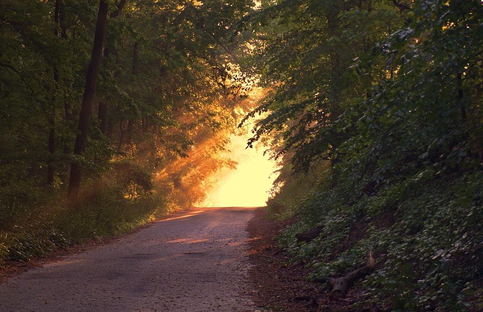 sunlight-166733_960_720.jpg