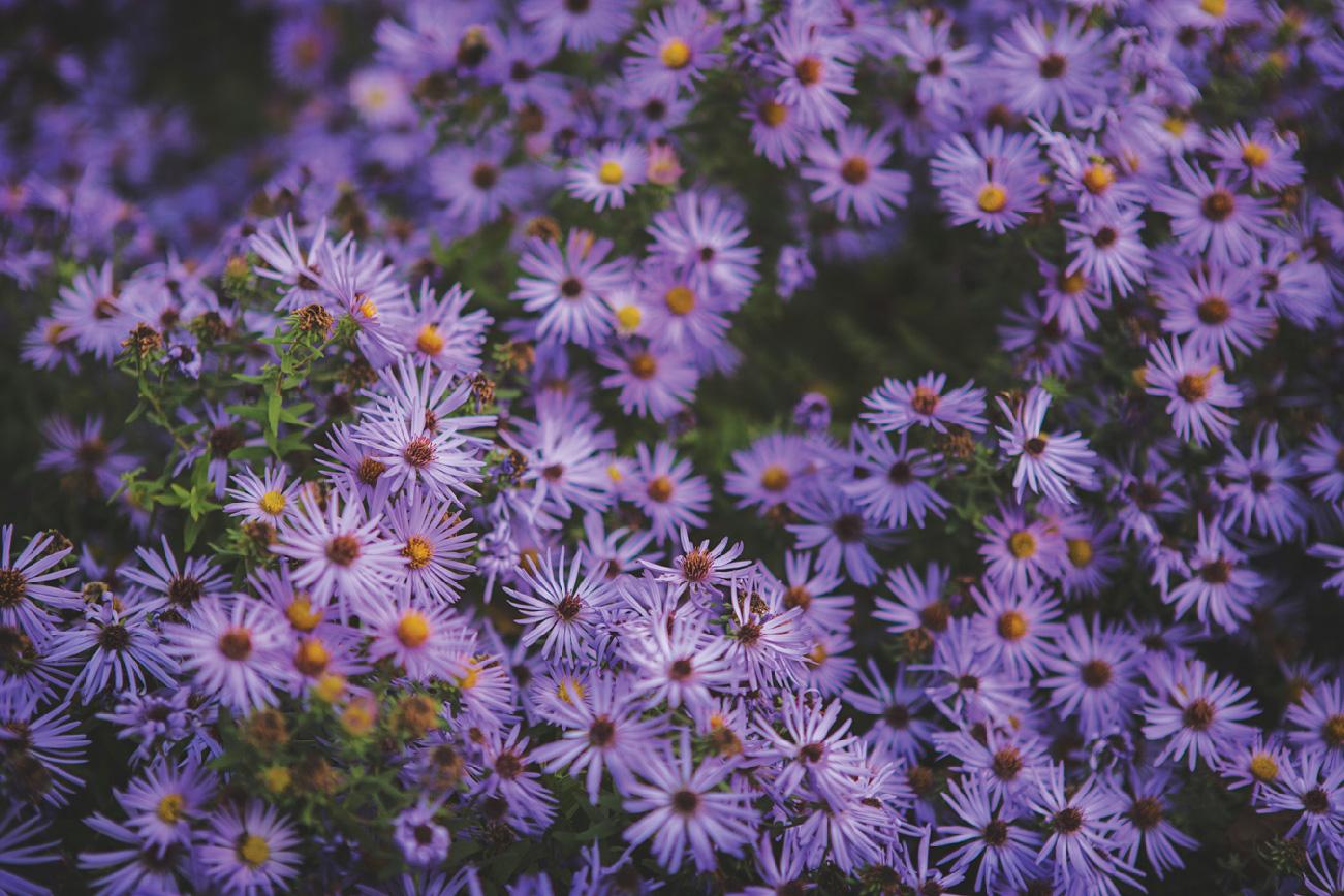 blooms_032017_toEdit_0004.jpg