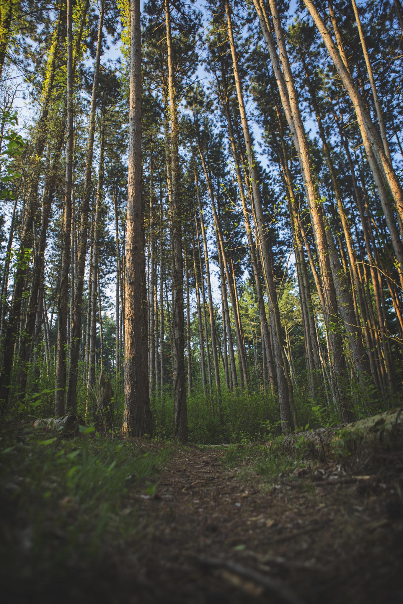 Denison_Bioreserver_Trees.jpg