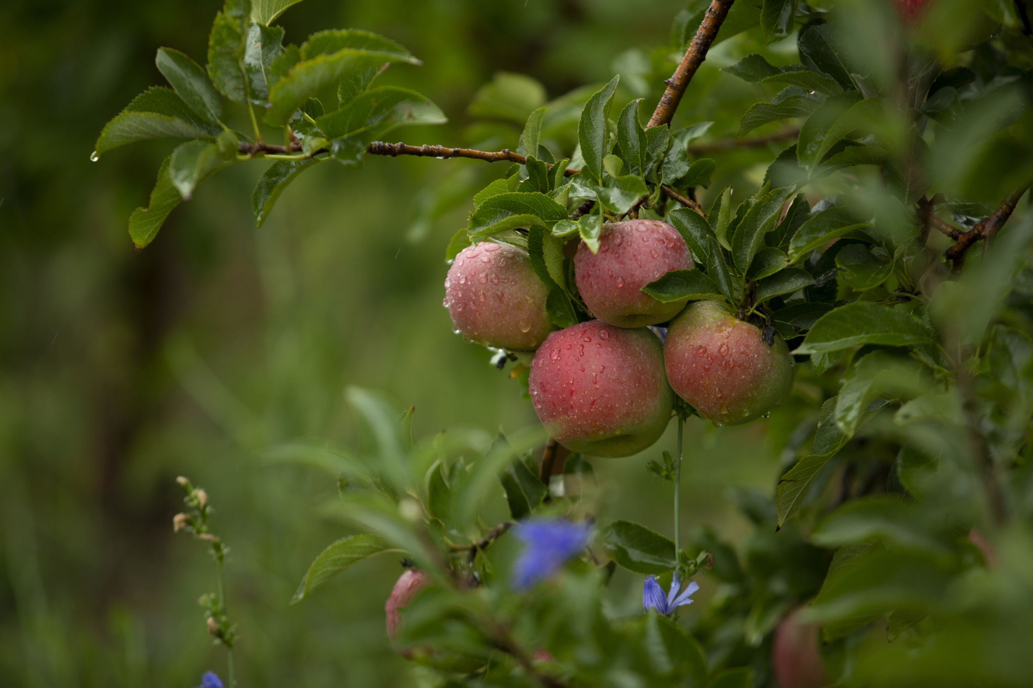 Branstool Orchard