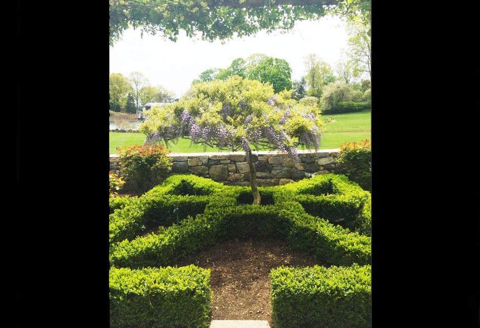 wisteria2.jpg
