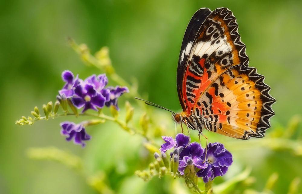 5x7 butterfly garden.jpg