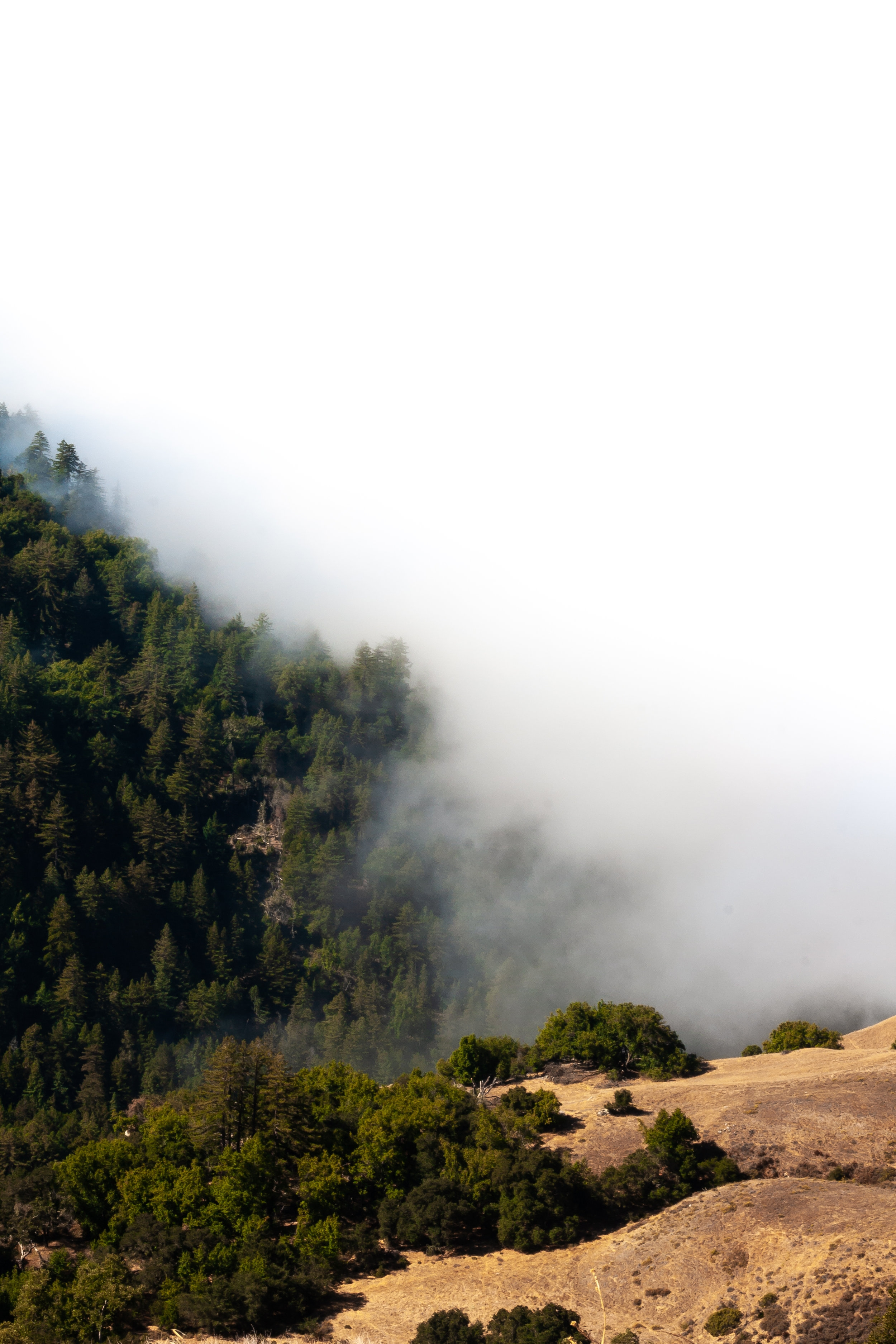 As we moved closer to the coast, a fog was guarding the path to the water.