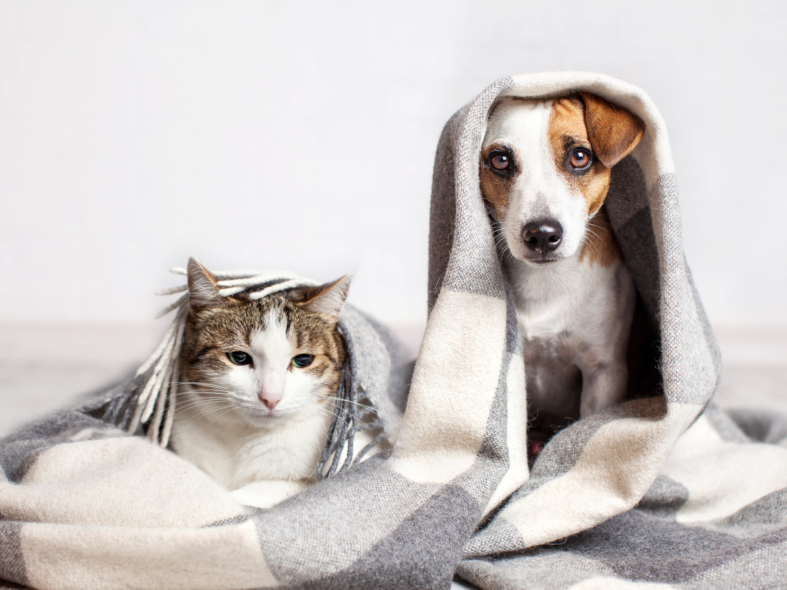 bigstock-Dog-and-cat-under-a-plaid-Pet-207104617.jpg