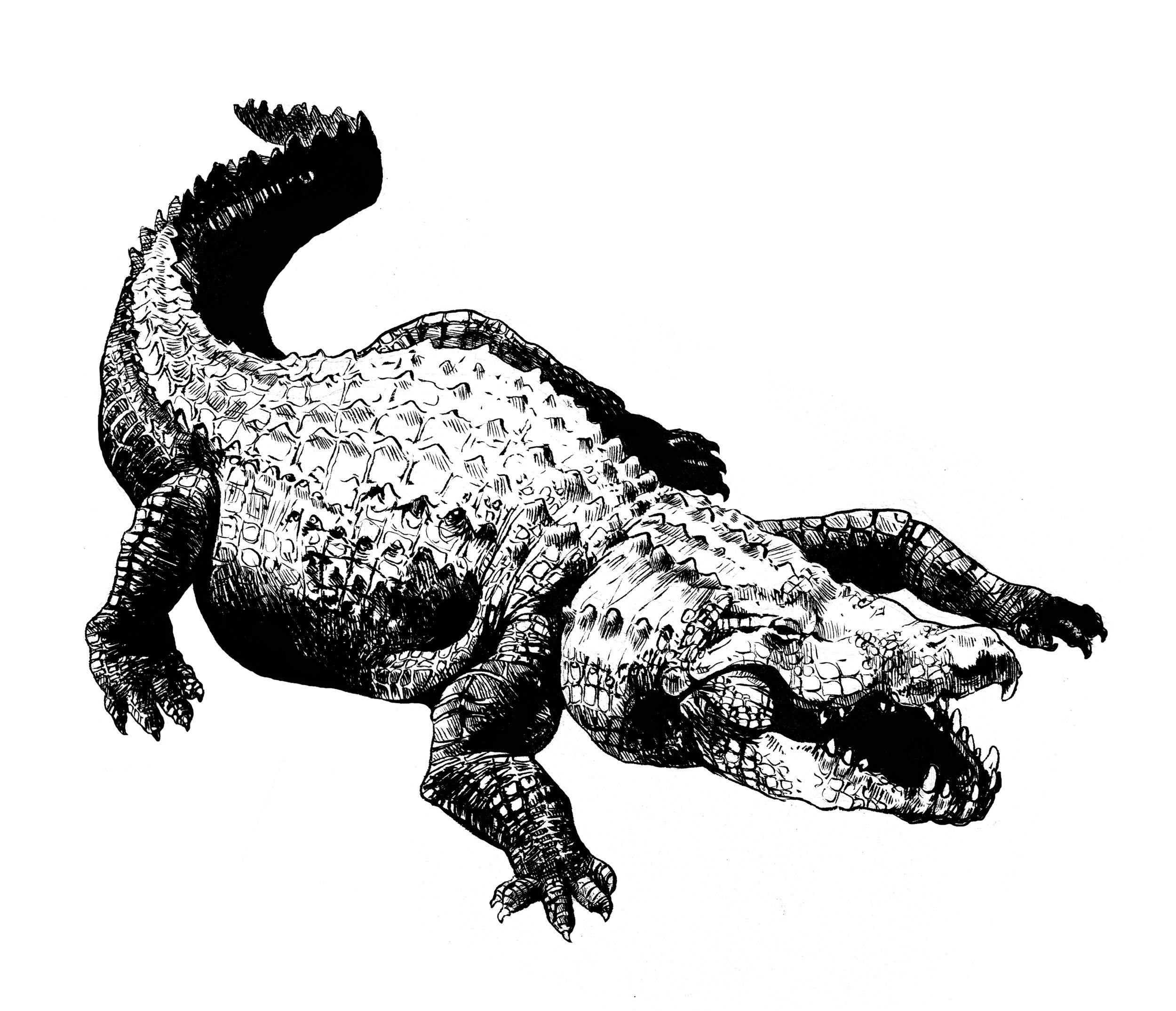 Alligator, Ink 2015