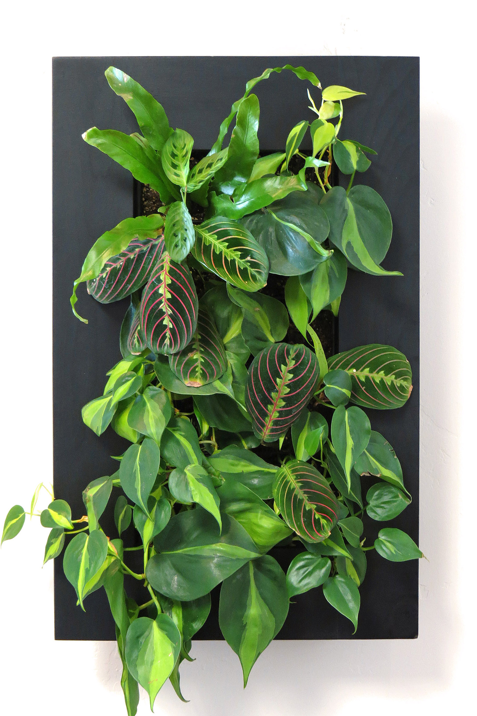 Plant Portrait - Custom Made