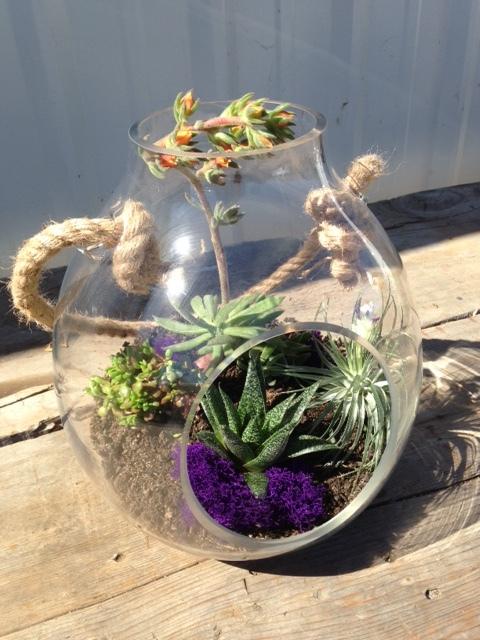 Specimen: Succulent Bowl