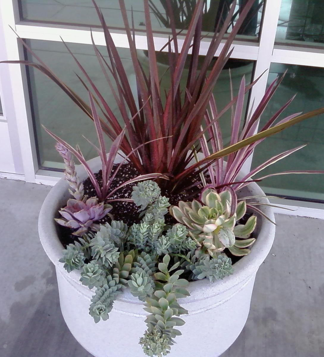 Specimen: Succulent Planting