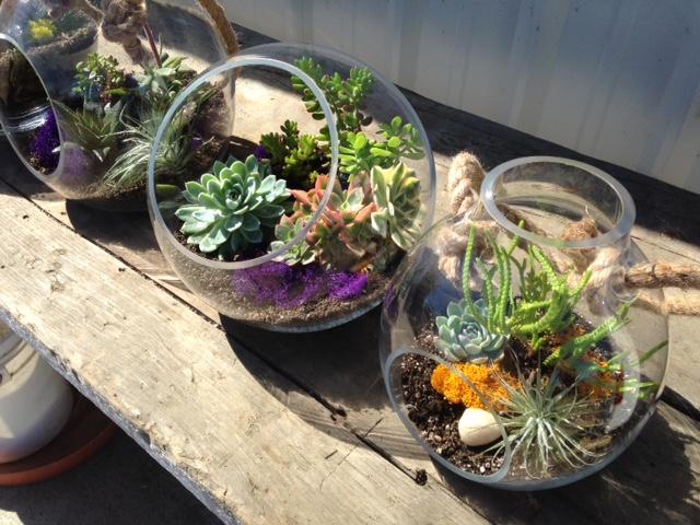 Specimen: Succulent Bowls