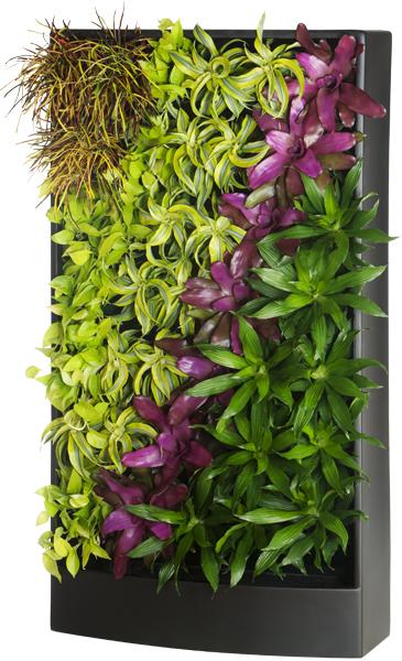 Specimen: Plant Portrait