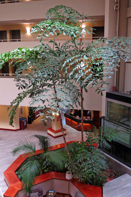 Radisson Hotel - Atrium