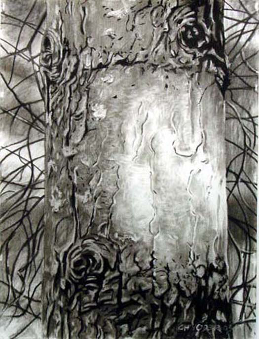 SHIMMER, 2003, charcoal on paper, 24 x 18