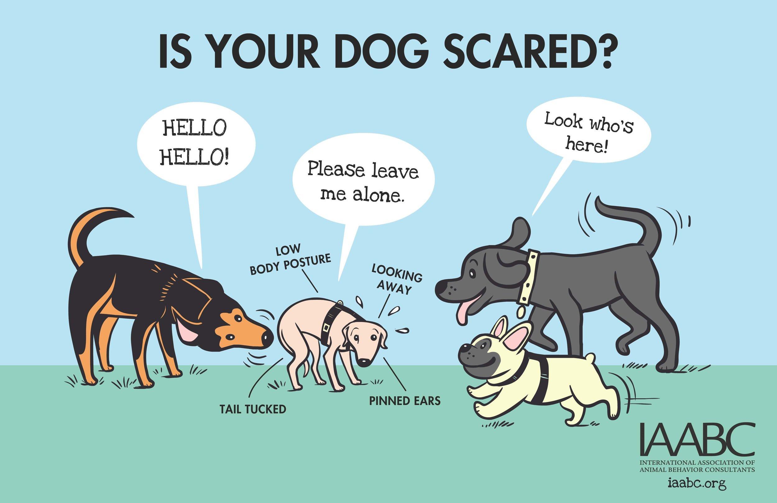 Fearful+Dog+Park+1.jpg