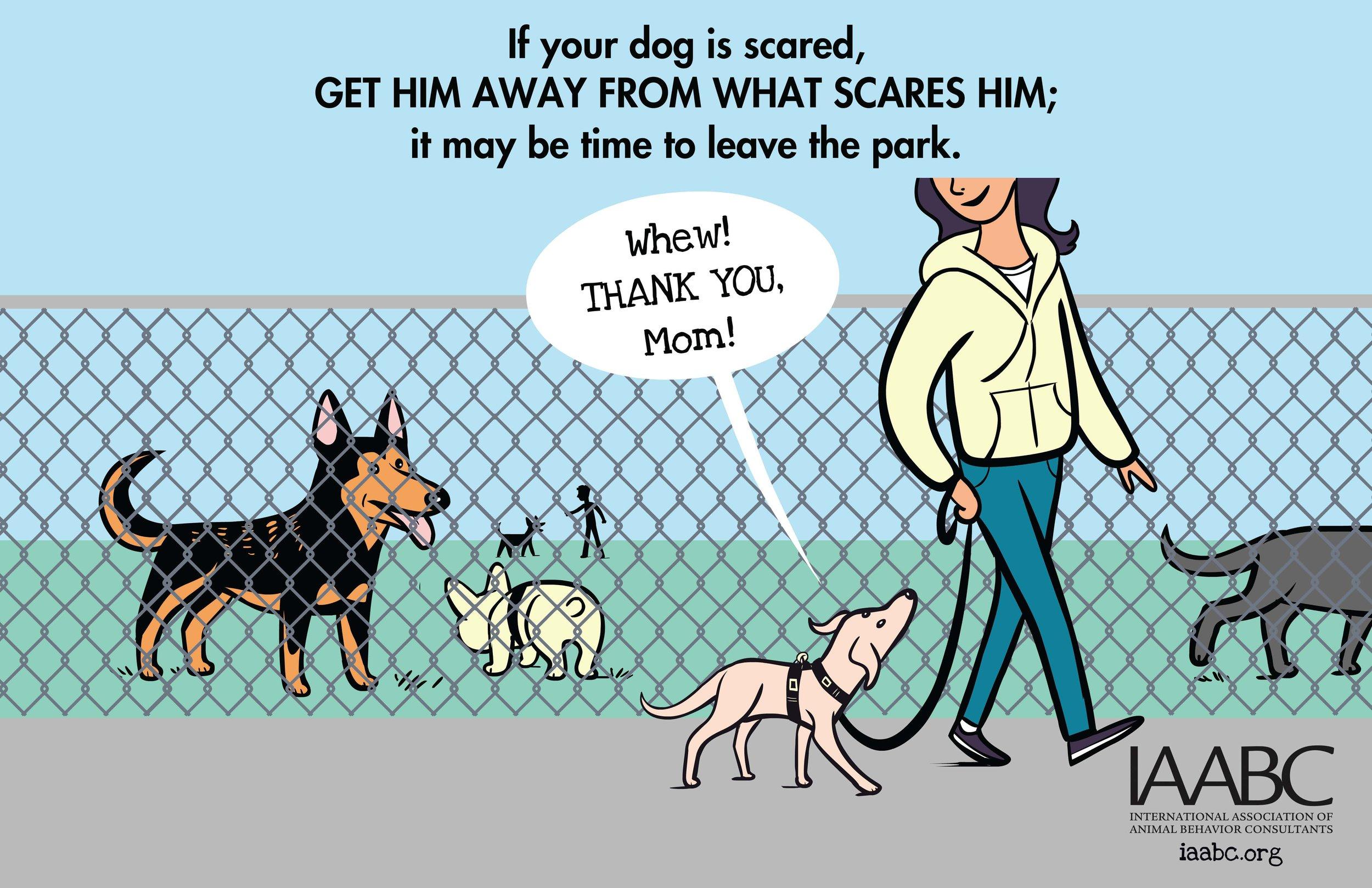 Fearful+Dog+Park+2.jpg