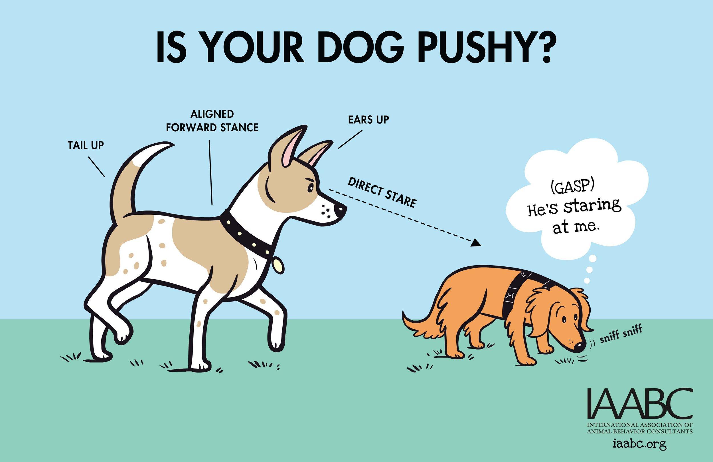 Pushy+Dog+1.jpg