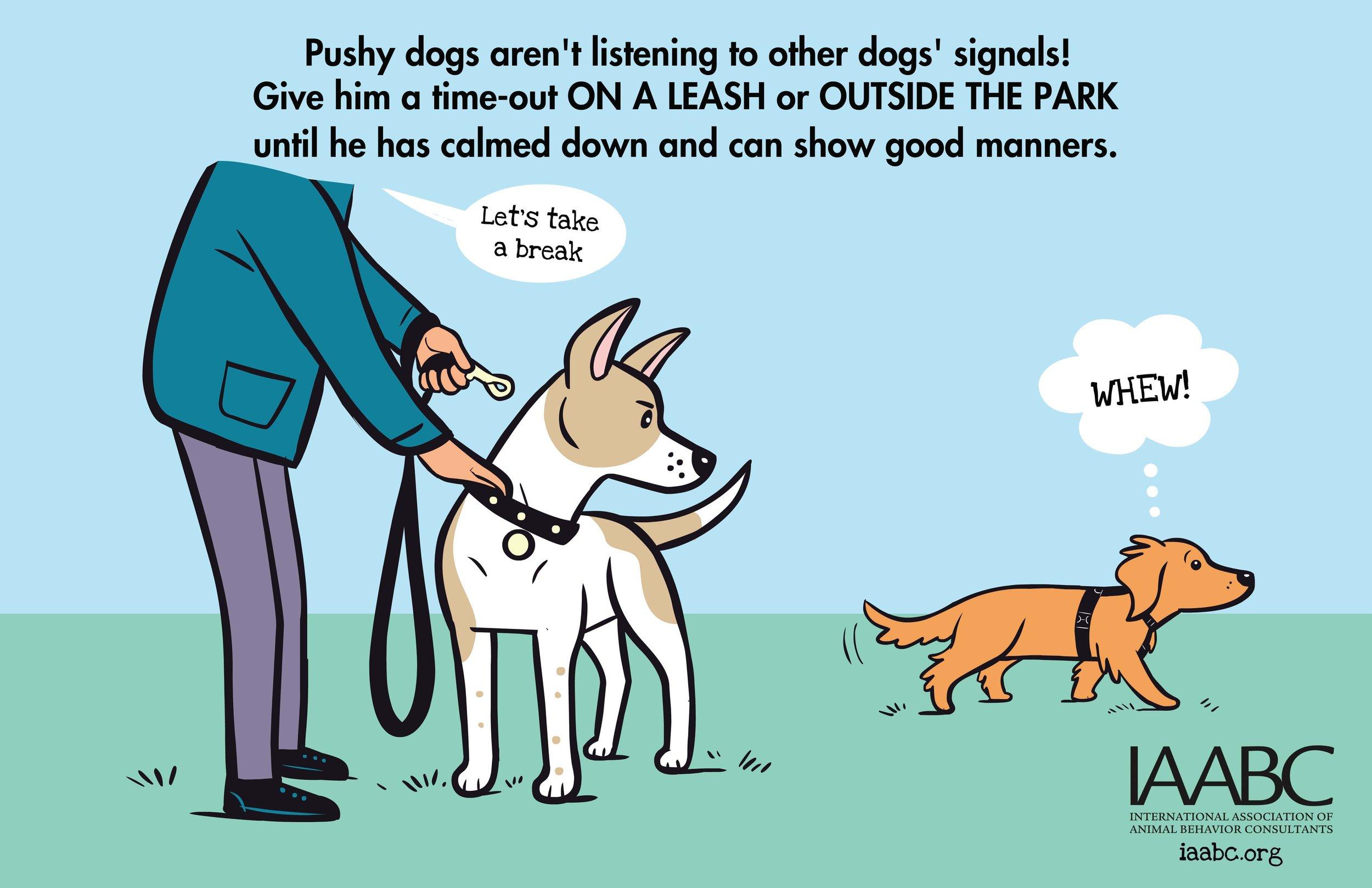Pushy+Dog+2.jpg