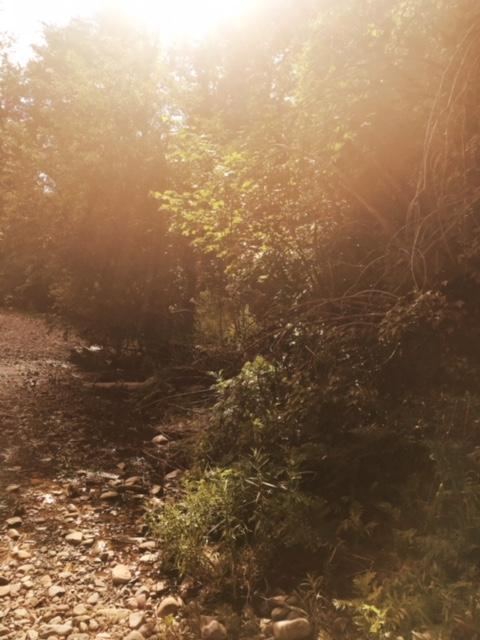 laurel-hill-montana.jpeg