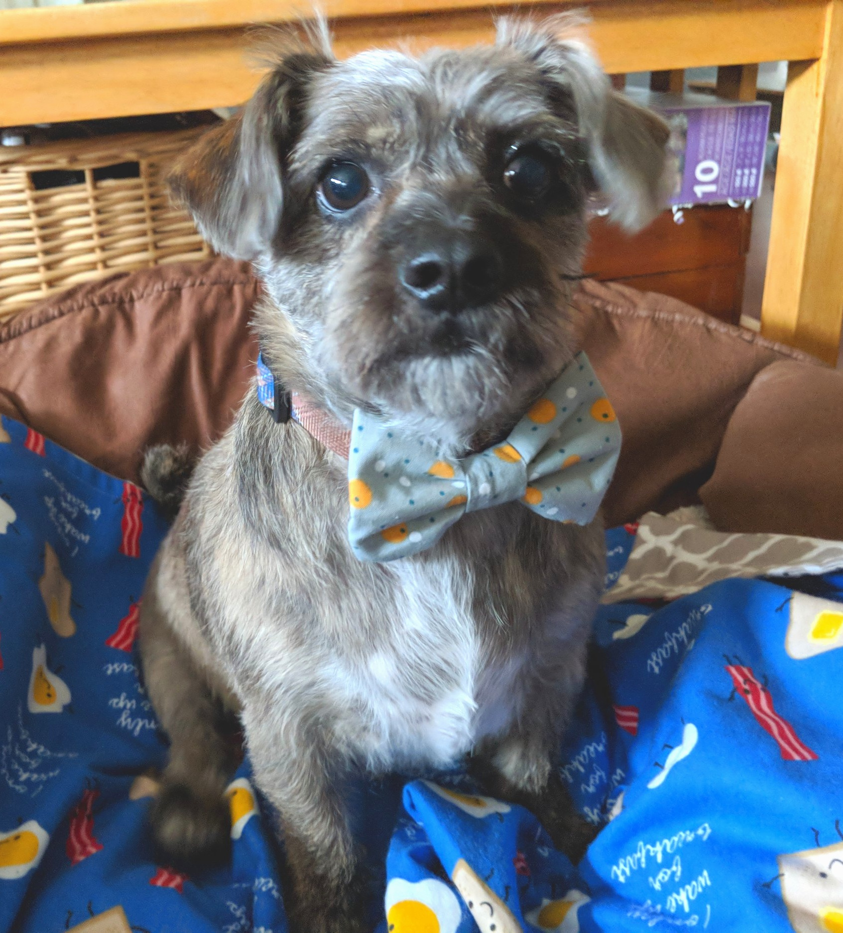 Toby 2018  And yes, he really wears bow ties every day!