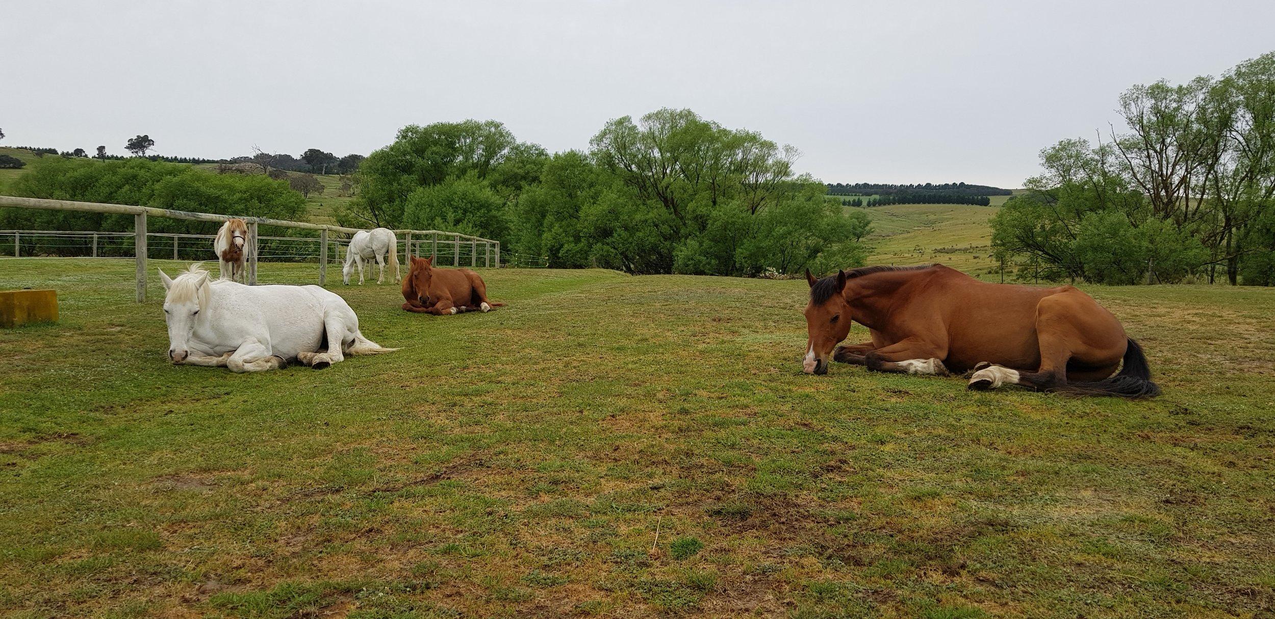 Horses Teaching Humans -