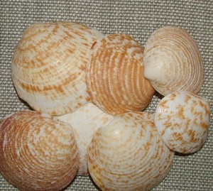 Shells for mirror