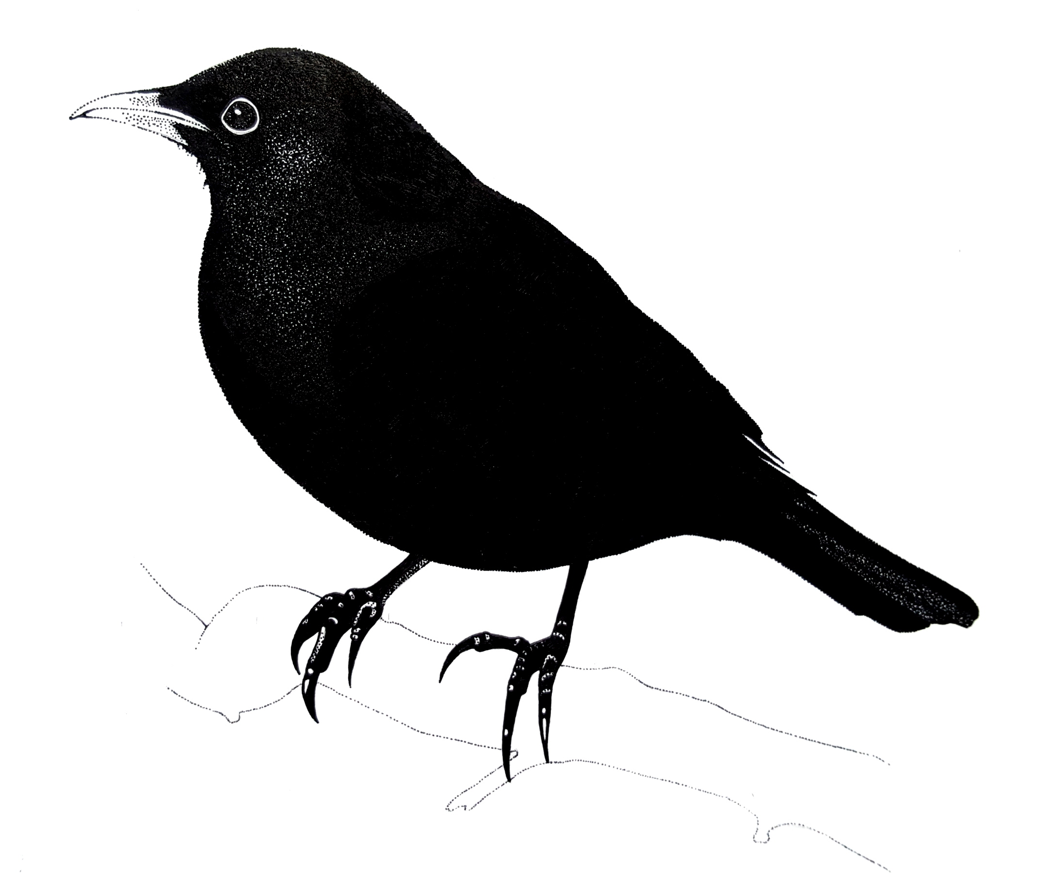 black-bird-felt-music-contact.jpg