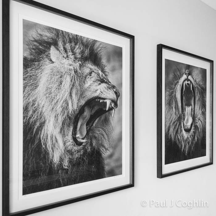 'Predator' and 'Devour' framed prints_© Paul J Coghlin_Instagram.jpg